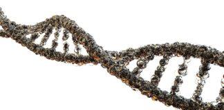 Gene Therapy and Gene Manipulation